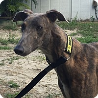 Adopt A Pet :: Kate - West Palm Beach, FL