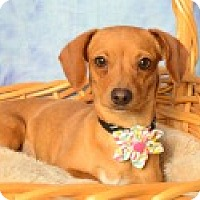 Adopt A Pet :: Mila - Pittsboro, NC