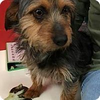 Adopt A Pet :: Ezra - Centerville, GA