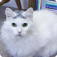 Adopt A Pet :: Fluffy - Winchendon, MA