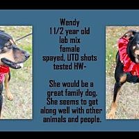 Adopt A Pet :: Wendy - Manchester, CT