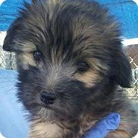 Adopt A Pet :: Nala - Las Vegas, NV