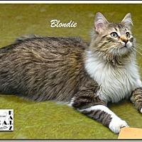 Adopt A Pet :: Blondie - Albuquerque, NM