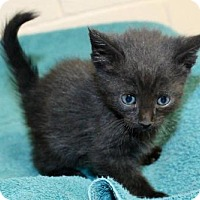 Adopt A Pet :: #121 Denney YOUNG MALE - EUTH ALERT! - Morehead, KY