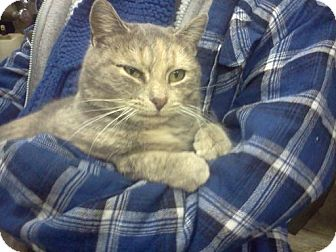 Domestic Shorthair Cat for adoption in Monroe, North Carolina - Miss Kitty