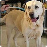 Adopt A Pet :: Champ - Cumming, GA