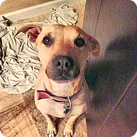Adopt A Pet :: Goldie (Courtesy Listing) - Scottsdale, AZ