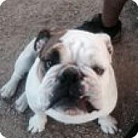 Adopt A Pet :: CLYDE - Atascadero, CA