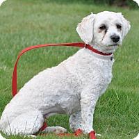 Adopt A Pet :: Leah - Tumwater, WA