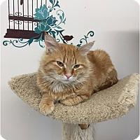 Adopt A Pet :: O'Mally - Edmonton, AB