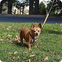 Adopt A Pet :: Pepe - Fallston, MD