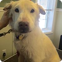 Adopt A Pet :: Gianni - Oak Ridge, NJ
