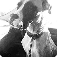 Adopt A Pet :: Gracie - Turnersville, NJ