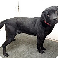 Adopt A Pet :: Mickey - Buckeystown, MD