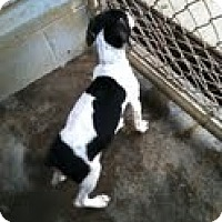 Adopt A Pet :: Jade - Athens, GA
