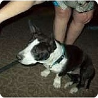 Adopt A Pet :: Sara - Alliance, NE