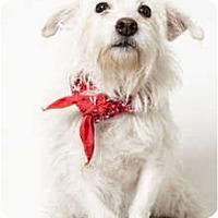 Adopt A Pet :: Tallulah - New York, NY