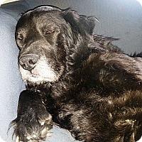 Adopt A Pet :: Elijah - Transfer, PA