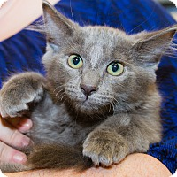 Adopt A Pet :: Dusty - Irvine, CA