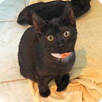 Adopt A Pet :: Ara - The Colony, TX