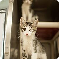 Adopt A Pet :: Phil - Athens, GA