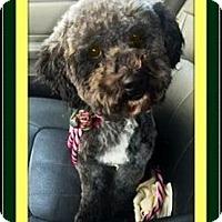 Adopt A Pet :: Magilla - Rancho Cucamonga, CA