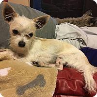 Adopt A Pet :: Jack-Jack - Windermere, FL