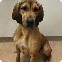 Adopt A Pet :: Lydia - Muscatine, IA
