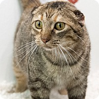 Adopt A Pet :: Whisper - Mt. Prospect, IL
