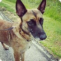 Adopt A Pet :: Nicole - Racine, WI