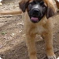 Adopt A Pet :: Chumba - Staunton, VA