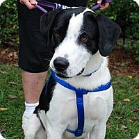 Adopt A Pet :: Max - Harrisburgh, PA