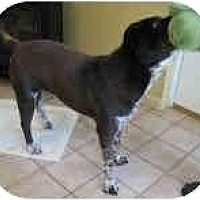 Adopt A Pet :: Moe - Bethesda, MD