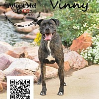 Adopt A Pet :: Vinny - Topeka, KS