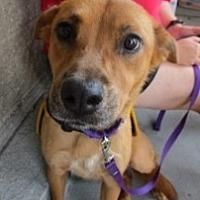 Adopt A Pet :: TABBY - Albany, NY
