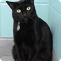Adopt A Pet :: Morticia - Bradenton, FL