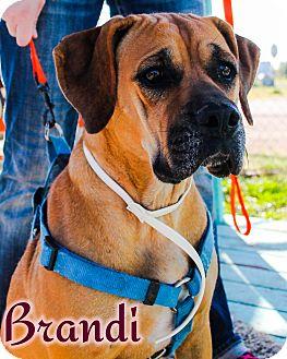 Hound (Unknown Type)/Pointer Mix Dog for adoption in Odessa, Texas - Brandi
