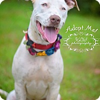 Adopt A Pet :: Leia - Fort Valley, GA
