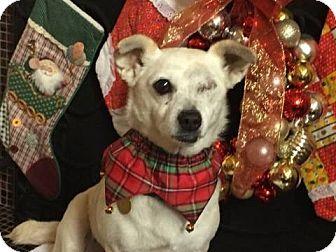 Pug Mix Dog for adoption in Huntington Beach, California - Candy