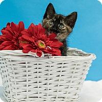 Adopt A Pet :: Christie - Houston, TX