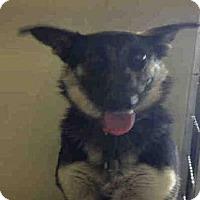 Adopt A Pet :: *JENNY - Bakersfield, CA