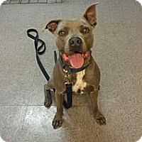 Adopt A Pet :: Jax - DFW, TX