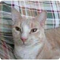 Adopt A Pet :: Stewie - New York, NY