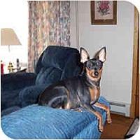 Adopt A Pet :: CASEY - Springvale, ME
