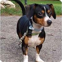 Adopt A Pet :: Keiran10lbs! - Toronto/Etobicoke/GTA, ON