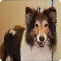 Adopt A Pet :: Willow - San Diego, CA