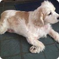 Adopt A Pet :: Leila - Marlton, NJ