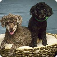Adopt A Pet :: Jack - Windsor, CA
