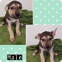 Adopt A Pet :: Zapata pending adoption - Manchester, CT