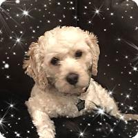 Adopt A Pet :: Ellis - TX - Tulsa, OK
